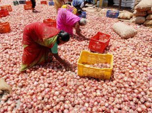 onion-prices-80-higher-than-last-year